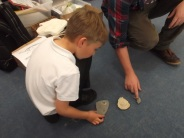 comparing fossils