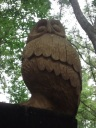 owls...